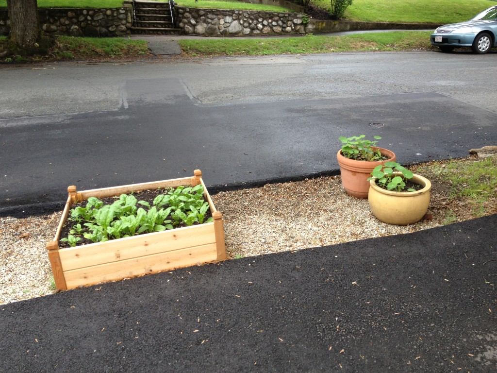 Raised Beds on Front Strip