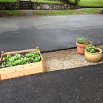 Raised Beds out Front