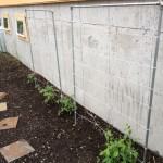Home-made trellises (metal conduit, 4' rebar, and nylon string) for tomatoes, peas, and beans
