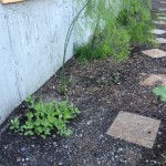 Pea Tendril Patch